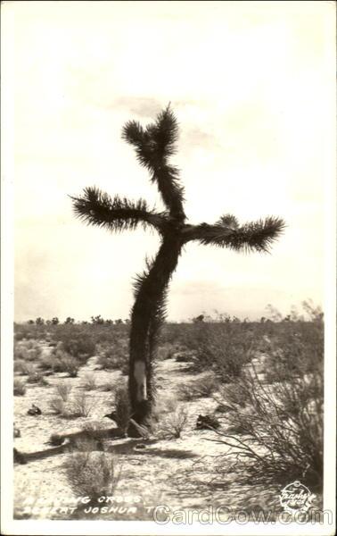 Driving Cross, Desert Joshua Tree