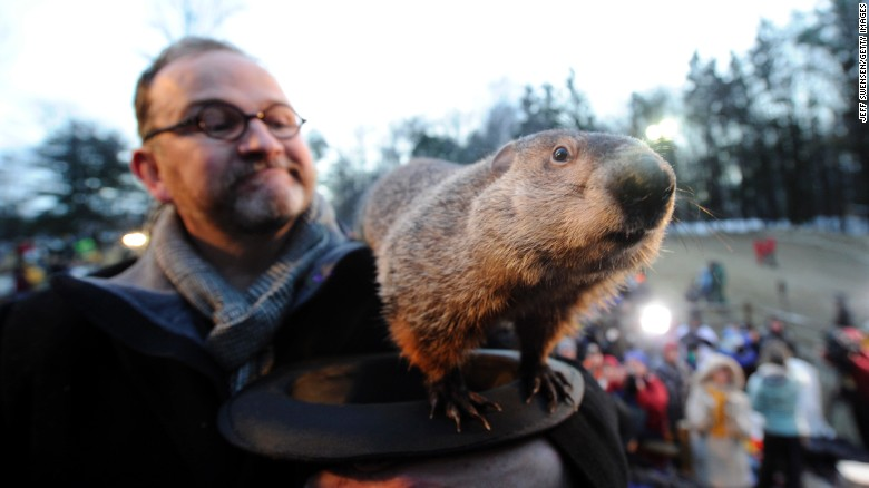 130329085422-festive-animals-groundhog-exlarge-169