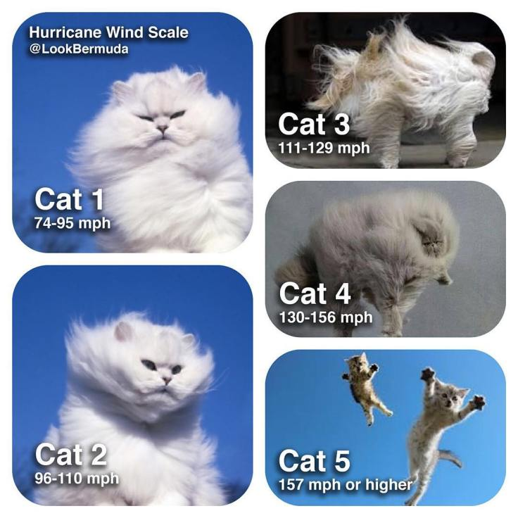 Hurricane wind scale - be safe and if needed secure your pets  #HurricaneWindScale  @lookbermuda